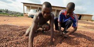 les-trois-geants-du-chocolat-sont-accuses-d-exploiter-des_3221787_800x400